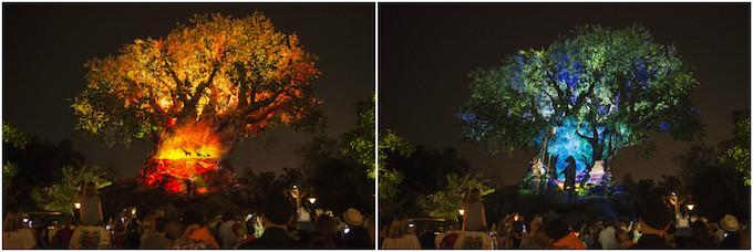 dtnemail-Tree_of_Life-ba1aa